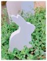 กระต่ายน้อยน่ารัก งานไม้สัก ทาสีไม้ด้วยสีอะคลีลิคสำหรับงานไม้ โทนสีขาว ใช้สำหรับตกแต่งบ้านหรือเป็นพรอพถ่ายรูปได้ค่ะ  Size : สูง 12 cm. ยาว 10 cm. กว้าง 2.5 cm. Weight : 122 g. Price : 190 บาท