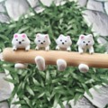 Cat ring   IG:aiakishop สอบถามได้นะคะ ตอนนี้ 4 วงนี้จ้า Line: emzsaki1004