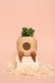 - Mini indoor planter : กระถางต้นไม้ขนาดเล็ก - ขนาด : H7 x L7 x W 6 cm  - ขนาดรูใส่ต้นไม้ : กว้าง 4 cm ลึก 3 cm * สินค้าชิ้นนี้ถูกออกแบบเพื่อให้ลูกค้าเติมหน้าตาบนสินค้าเองและไม่มีรูระบายน้ำ แต่ถ้าหากลูกค้าชอบการวาดหน้าในแบบของboodwoodหรือต้องการรูระบายน้ำ เรามีบริการเติมหน้าและเจาะรูระบายน้ำให้เป็นพิเศษได้  โดยสามารถแจ้งทาง Note to seller หรือ ช่องข้อความเพิ่มเติมถึงร้านค้า - ค่าส่ง ลงทะเบียน 20 บาท /  ems 50 บาท